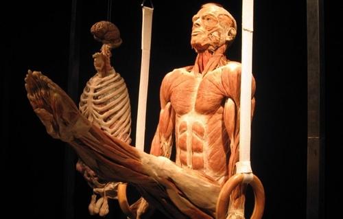 Exposicao Mostra Corpo Humano Por Dentro No Goiania Shopping Aredacao